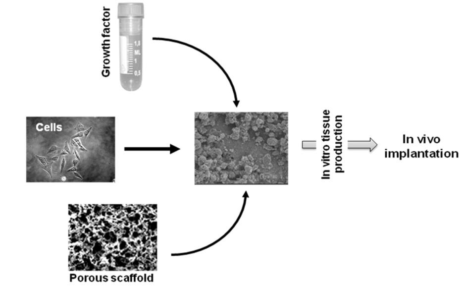 electrical stimulation in tissue regeneration