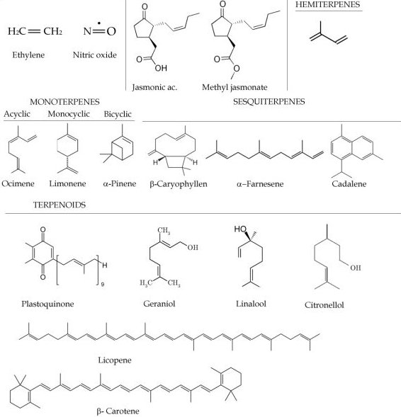 Emission and Function of Volatile Organic Compounds in