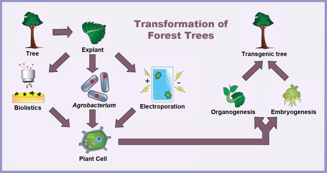figure 2  schematic