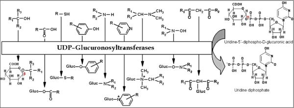 PPT (ADME (Metabolism (Phase 1 & 2, CYPXXX, …