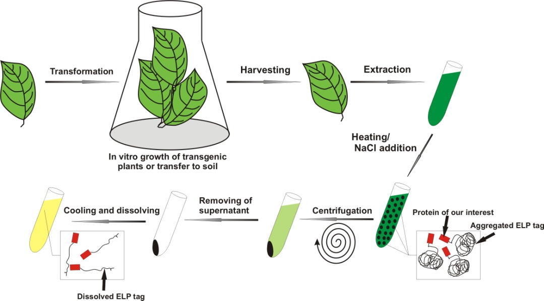 Green Way Of Biomedicine How To Force Plants To Produce
