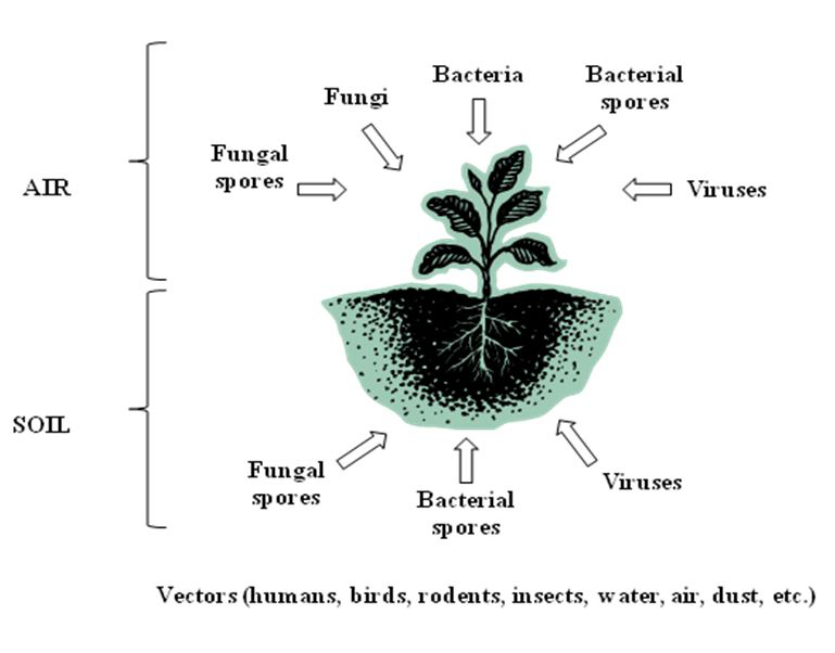Microbial Quality of Medicinal Plant Materials | IntechOpen