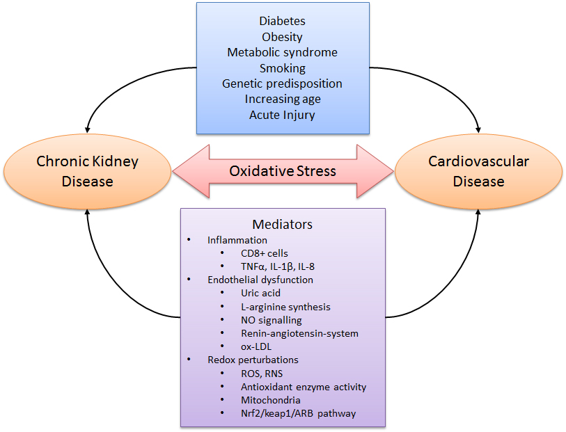 Oxidative Stress And Antioxidant Therapy In Chronic Kidney And Cardiovascular Disease Intechopen
