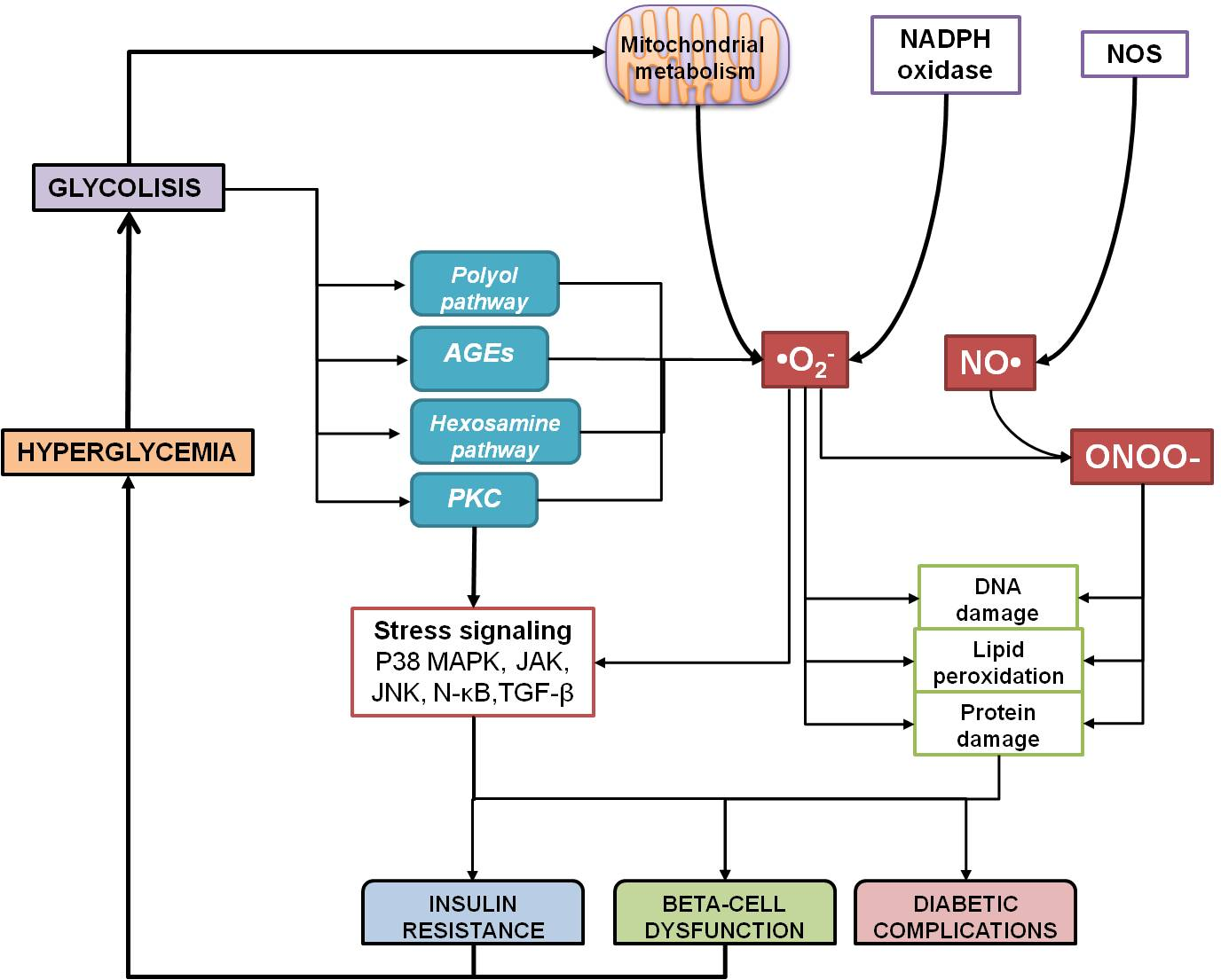 Oxidative Stress in Diabetes Mellitus and the Role Of