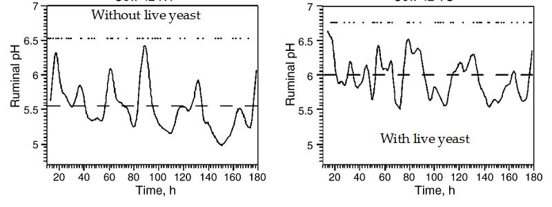 factors affecting yeast fermentation
