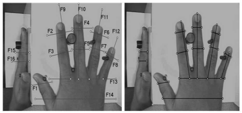 Basic Principles and Trends in Hand Geometry and Hand Shape