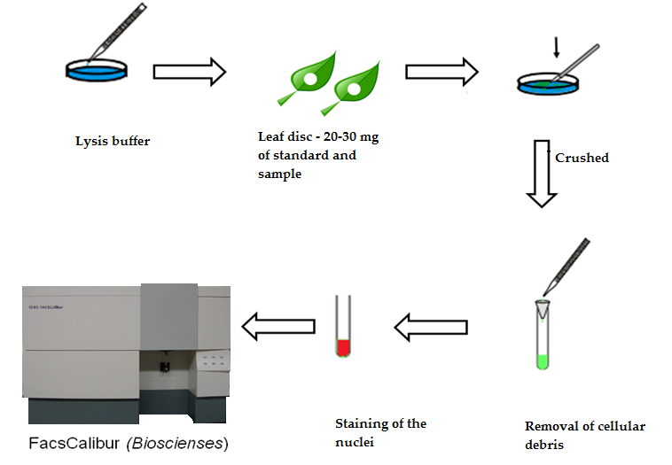 Flow Cytometry Applied in Tissue Culture | IntechOpen