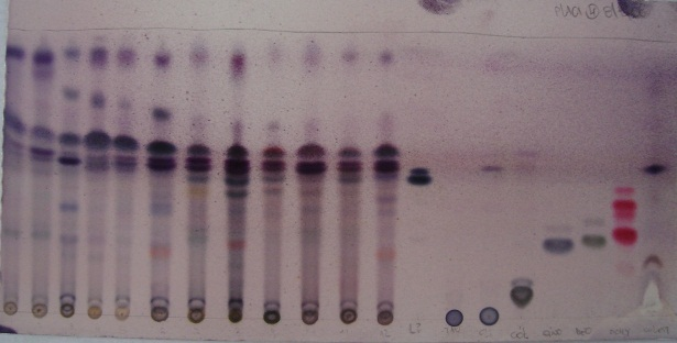 separation of amino acids by paper chromatography discussion