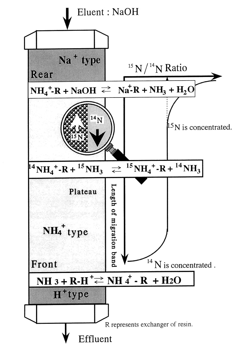 The Separation of Isotopes by the Ionic Migration Method