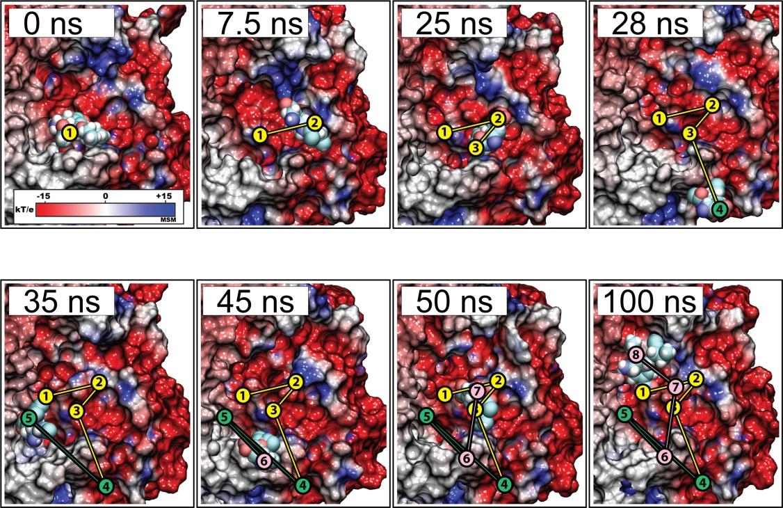 Incorporating Molecular Dynamics Simulations into Rational