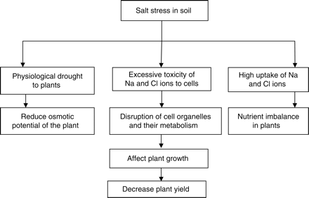 Comparison Between the Water and Salt Stress Effects on