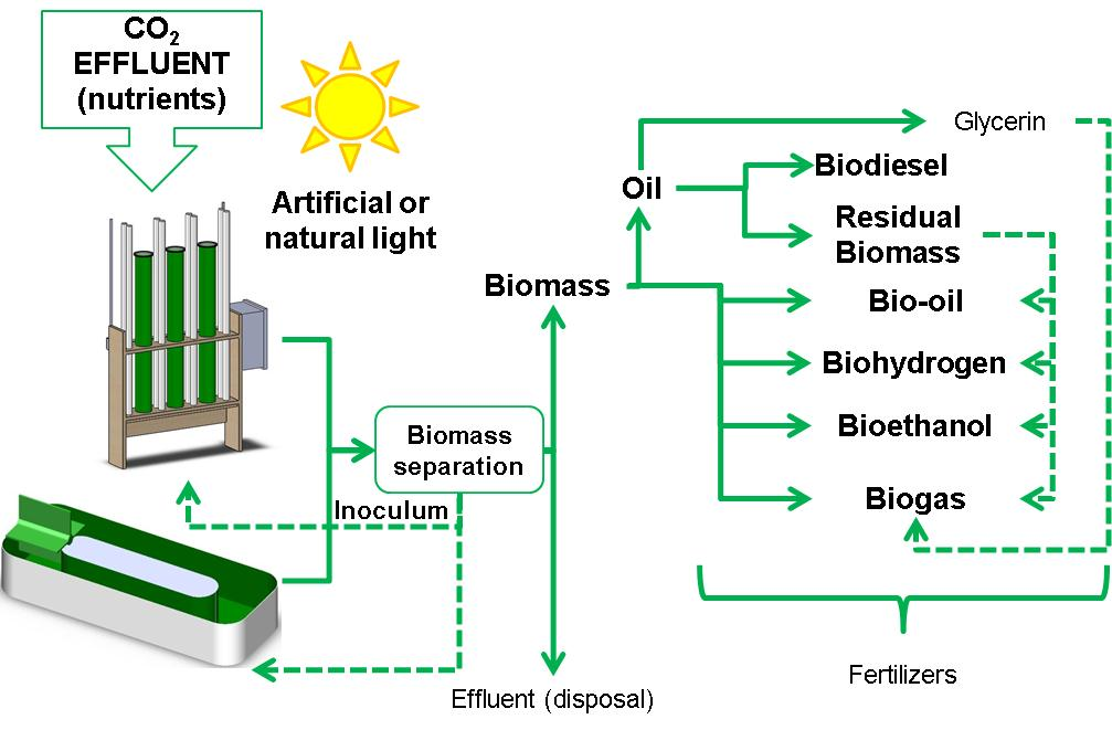 Potential Production Of Biofuel From Microalgae Biomass