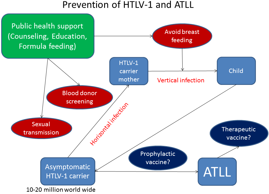 Prevention Of Human T Cell Lymphotropic Virus Infection And Adult T