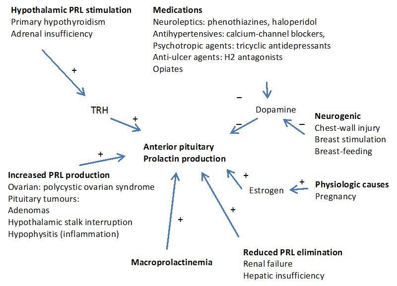 Prolactin and Infertility | IntechOpen
