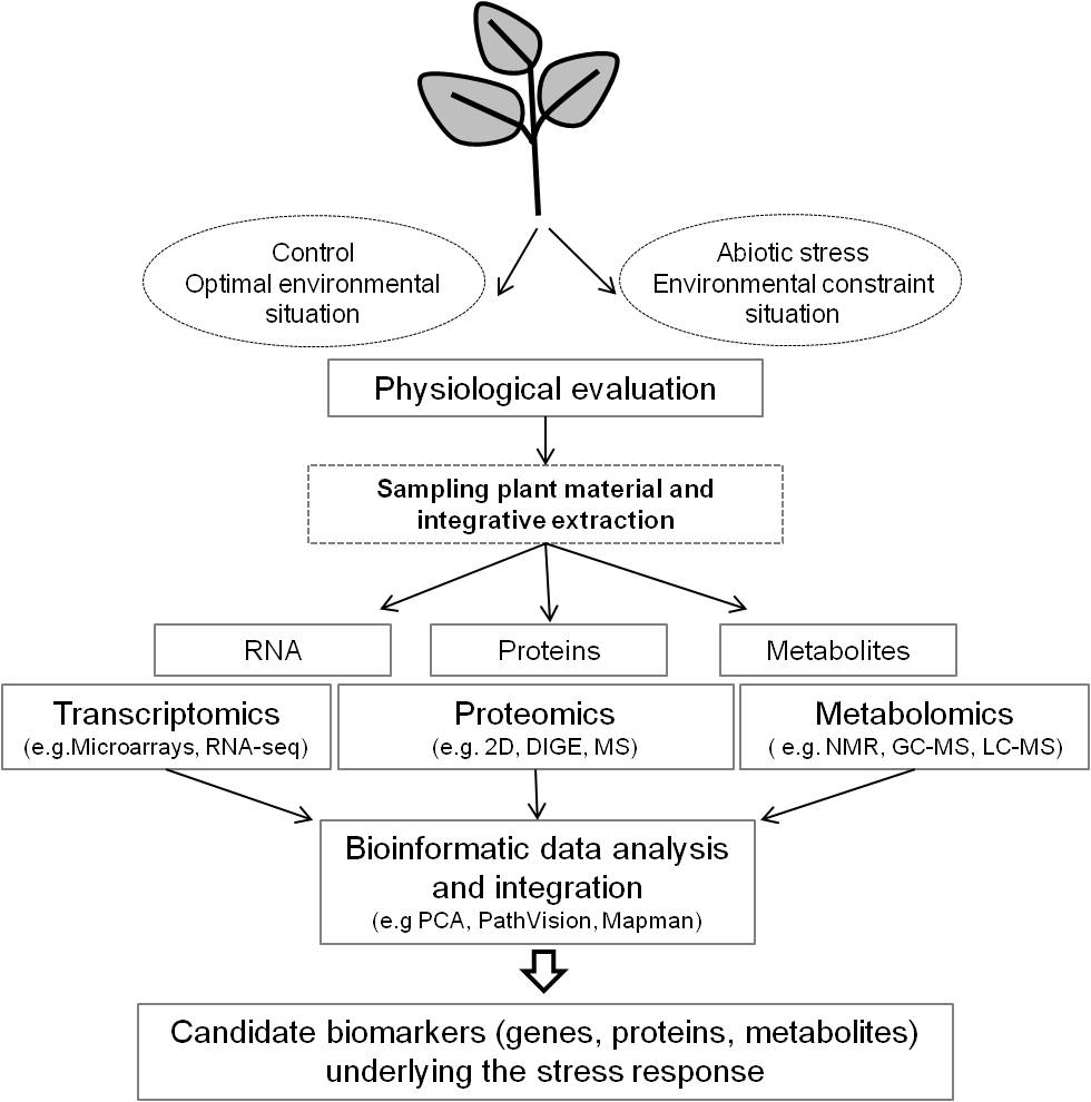 Abiotic Stress Responses in Plants: Unraveling the