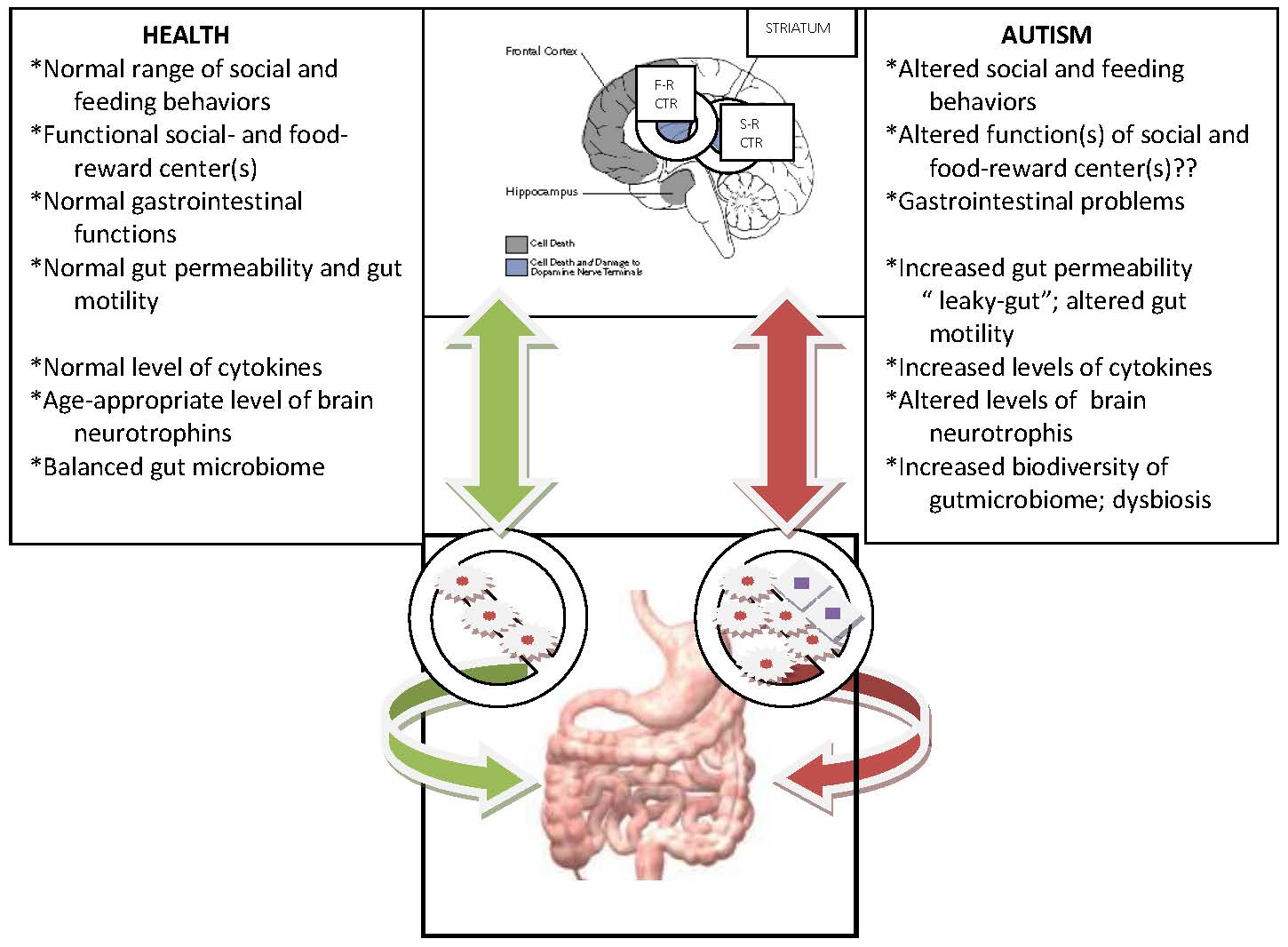Gut Feeling How Microbes Shape Autism >> Gut Microbiome And Brain Gut Axis In Autism Aberrant Development
