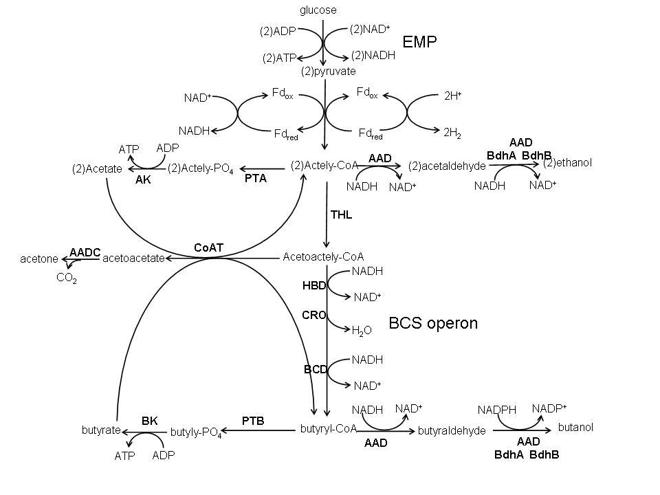 The Promising Fuel-Biobutanol   IntechOpen