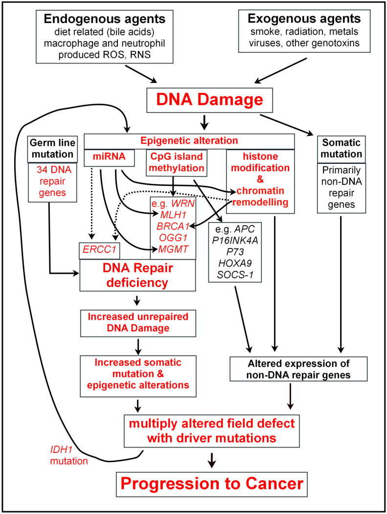 DNA Damage, DNA Repair and Cancer | IntechOpen