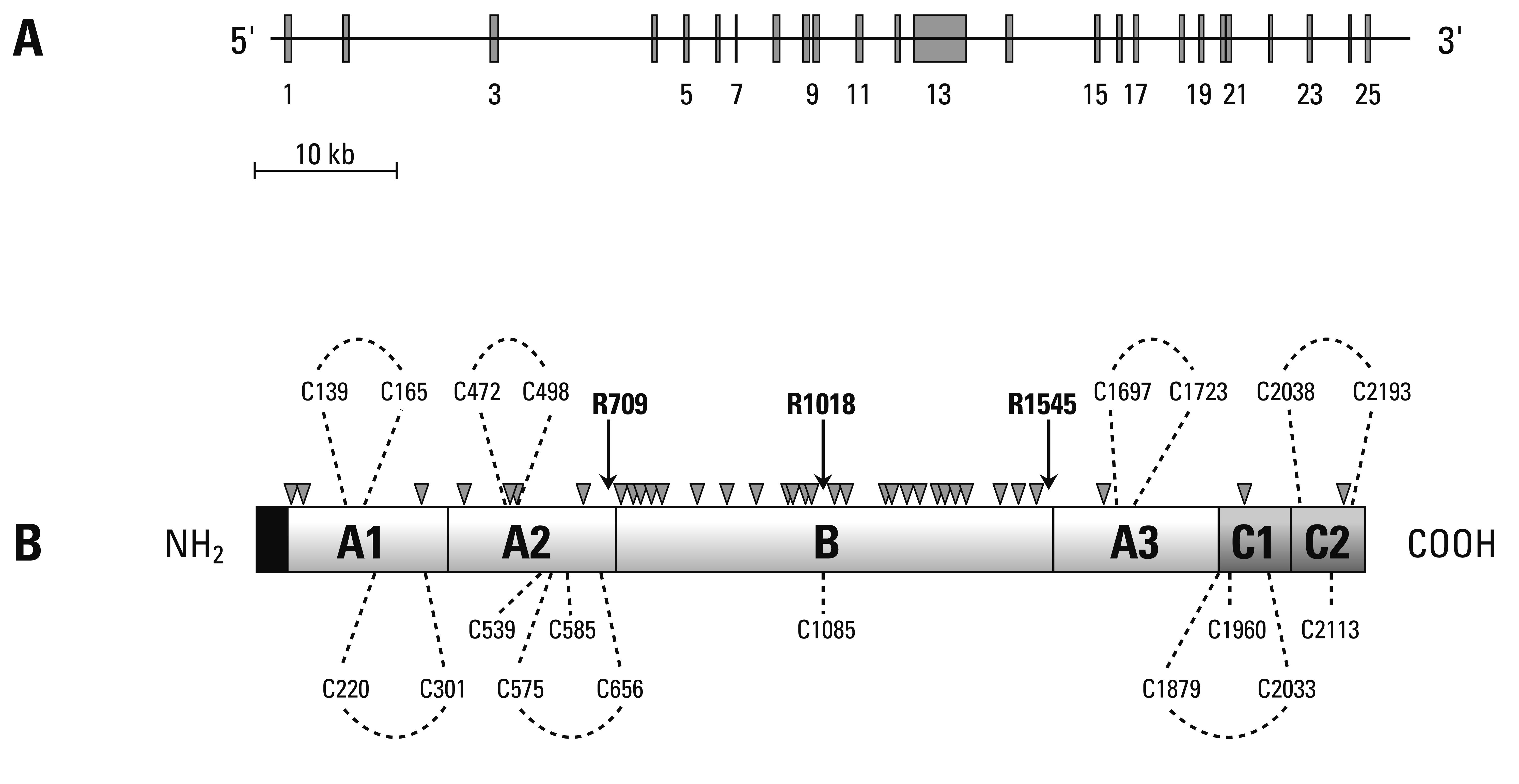 Genetics And Molecular Pathophysiology Of Thrombotic States