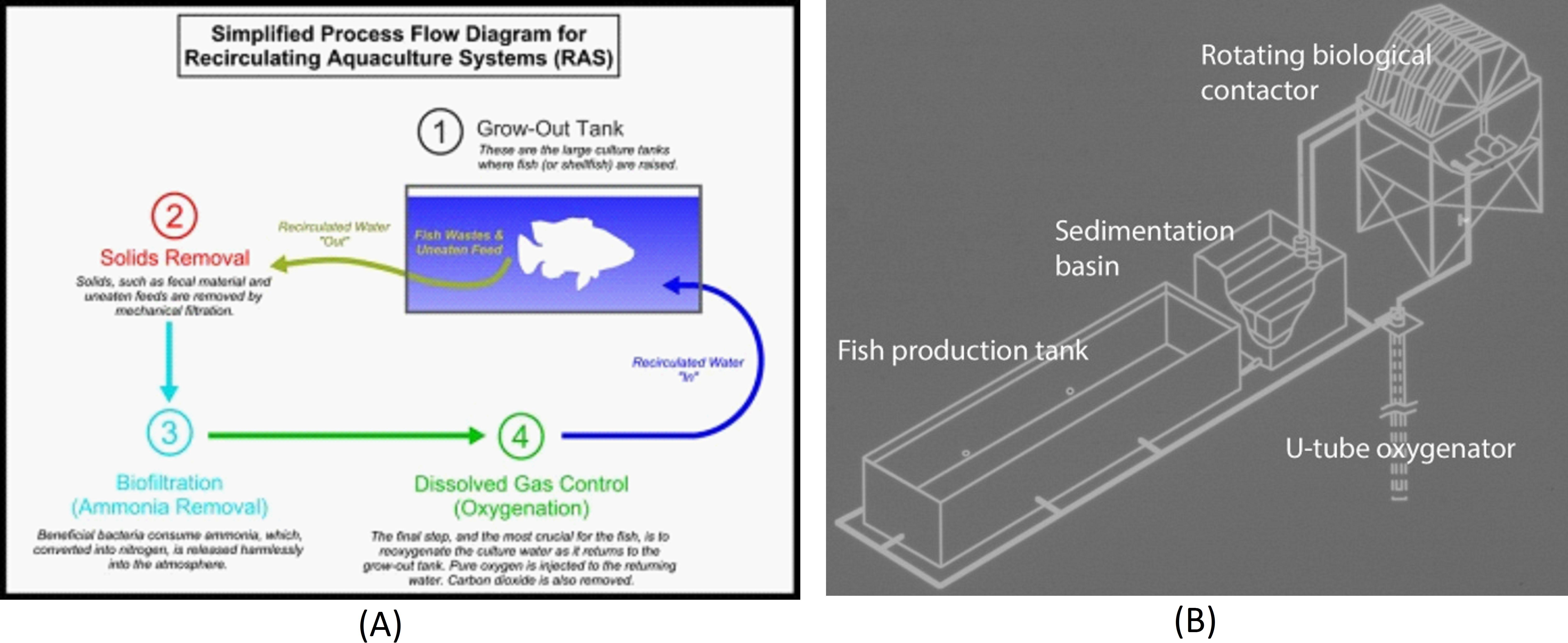 Biodegradation of Nitrogen in a Commercial Recirculating Aquaculture