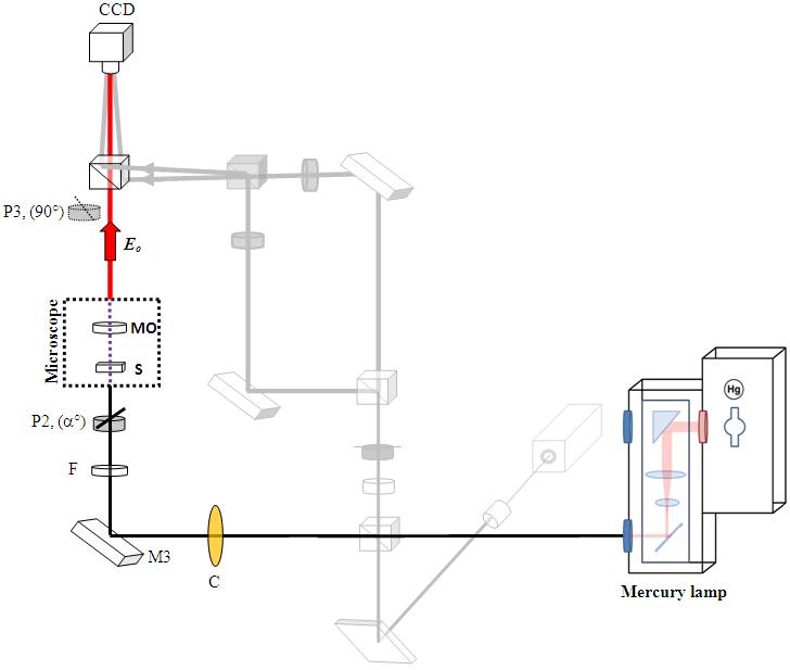 figure 2  differential polarization microscope  light