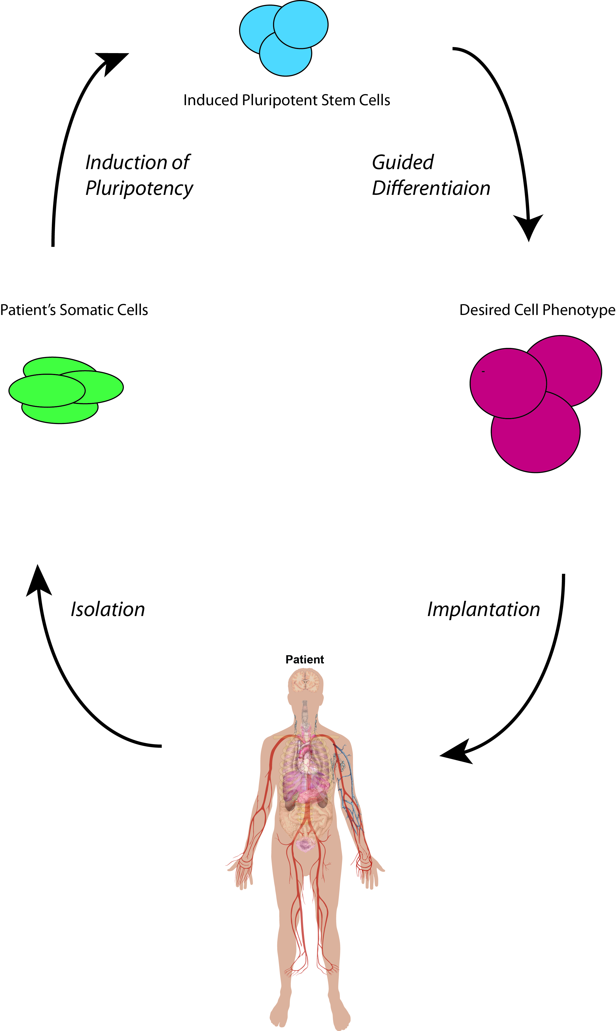 induced pluripotent stem cells: current and emerging technologies