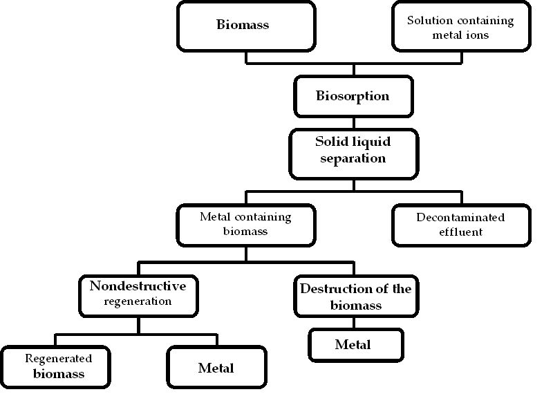 Bioremediation Of Waters Contaminated With Heavy Metals