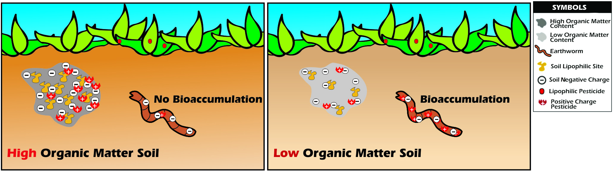 Lecture 6: Soil contamination and Bioremediation of soil | Dr.M.Azizul's  Blog