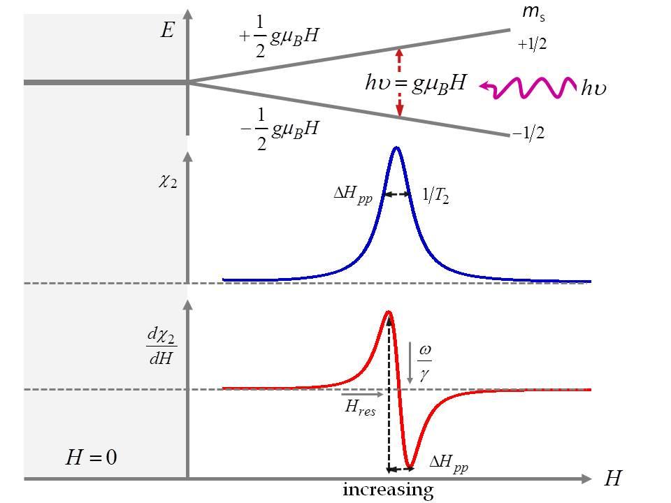 Elektron spin resonans dating definition