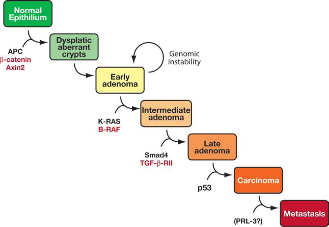 Possible Role Of Proto Oncogenes In Colorectal Cancer A Population Based Study Intechopen