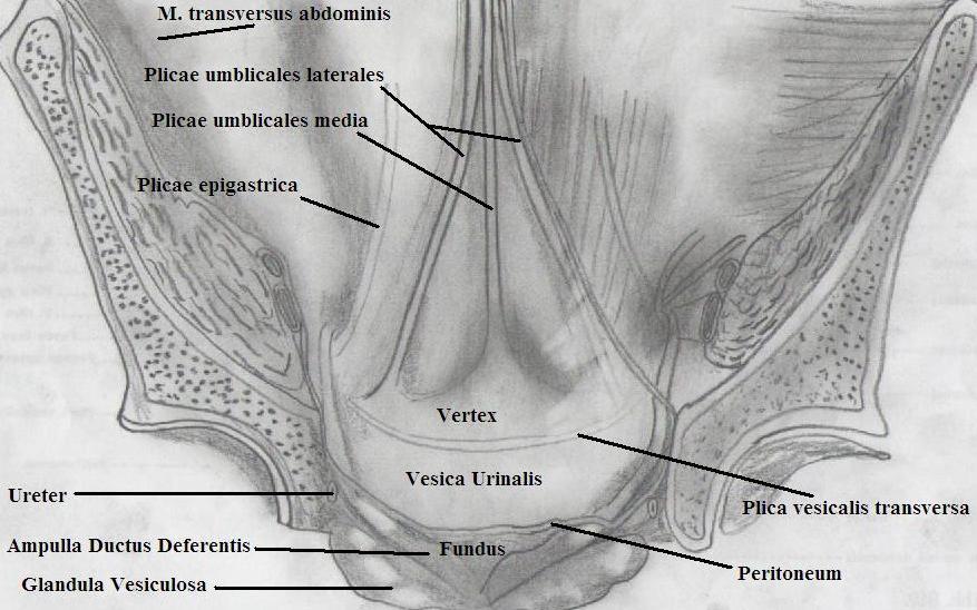 Groin Hernia Repair In Laparoscopic Era Intechopen