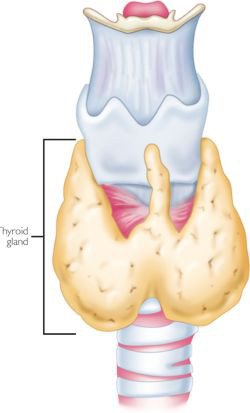 Surgical Management Of Hyperthyroidism Intechopen