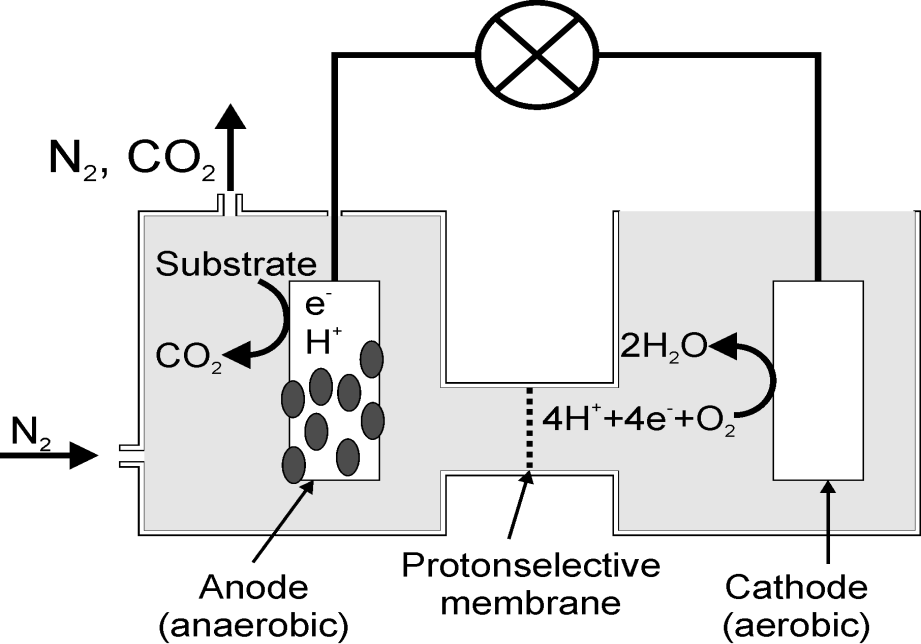 Removal of COD by Two-Chamber Microbial Fuel Cells   IntechOpen