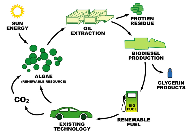 Image result for Biodiesel Production