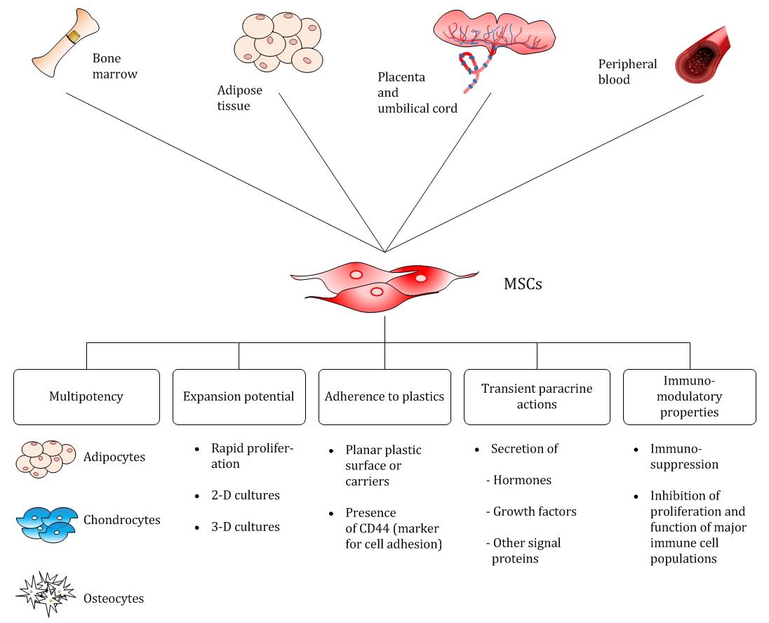 mass production of mesenchymal stem cells — impact of bioreactor