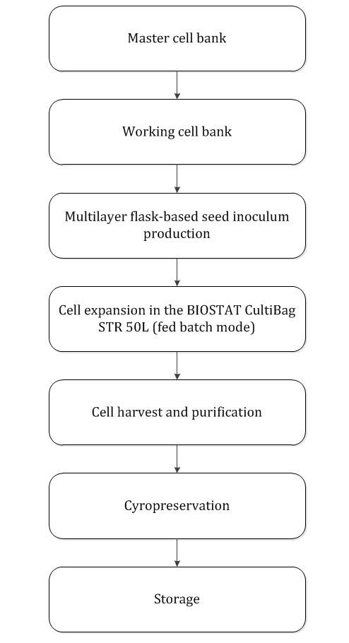 Mass Production of Mesenchymal Stem Cells — Impact of Bioreactor ...
