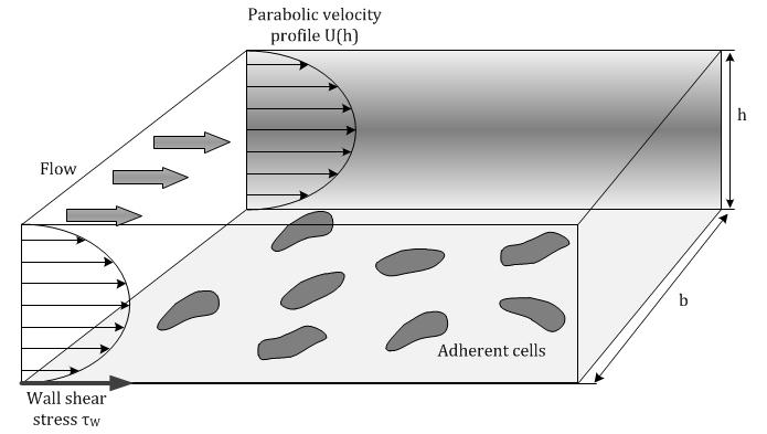 Mass Production of Mesenchymal Stem Cells — Impact of