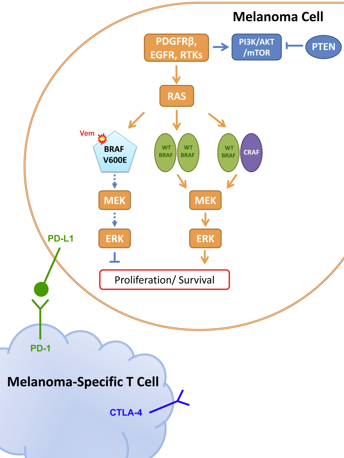 Emerging Drug Combination Approaches In Melanoma Therapy