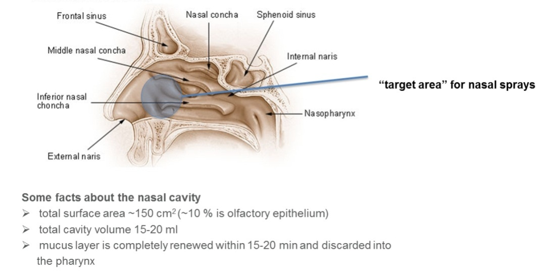 Intranasal Drug Administration An Attractive Delivery Route For