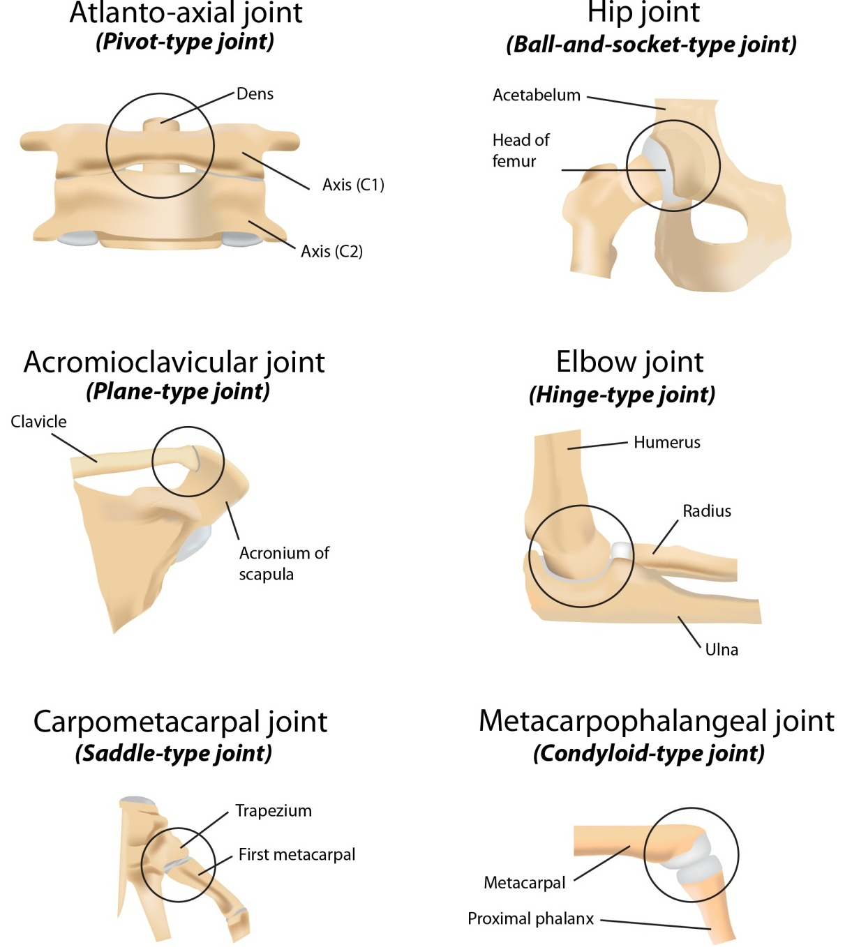 classifications and definitions of normal joints intechopen