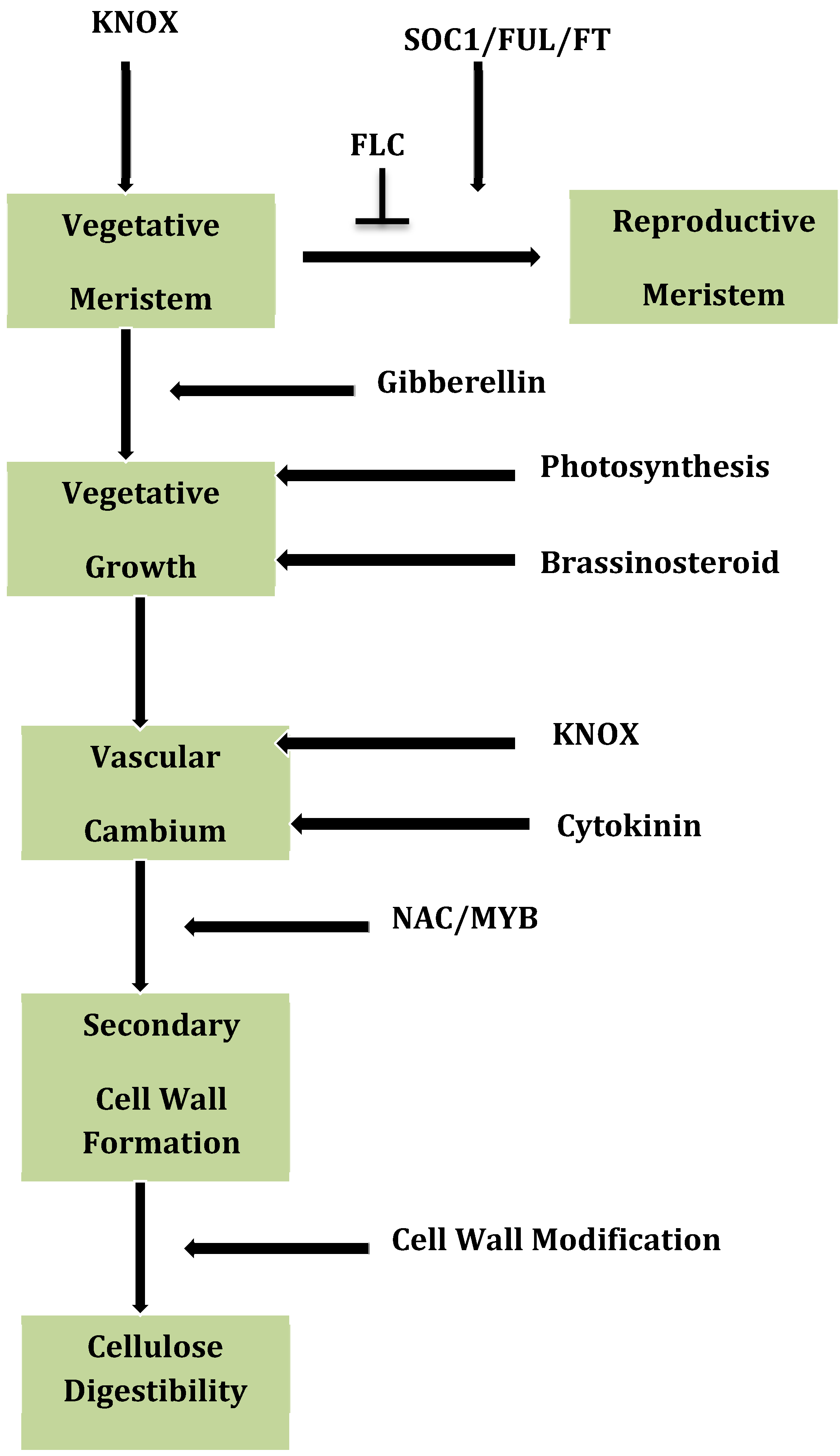 Genetic Strategies To Enhance Plant Biomass Yield And Quality Plants With Names In Addition Diagram Of Dual Kitchen Sink Drain Figure 7