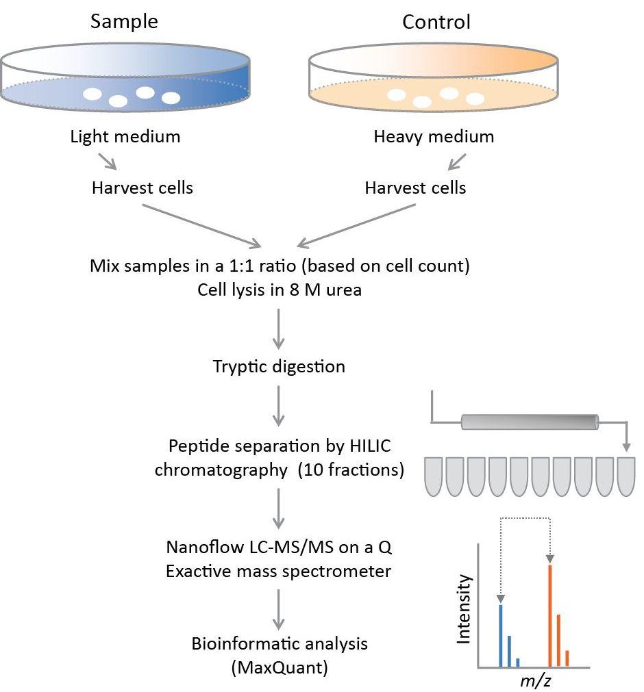 Quantitative Mass Spectrometry-based Proteomics | IntechOpen
