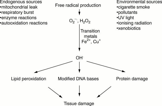 Members of Antioxidant Machinery and Their Functions