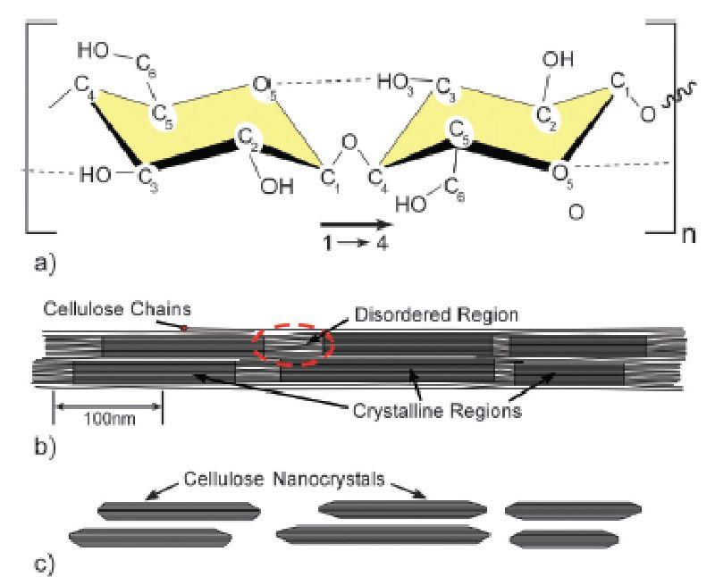Cellulose Grafting by Atom Transfer Radical Polymerization Method