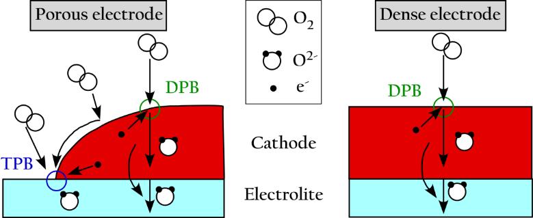 Designing Perovskite Oxides for Solid Oxide Fuel Cells