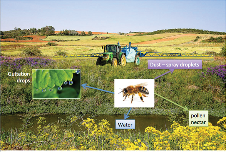 Impacts of Pesticides on Honey Bees | IntechOpen