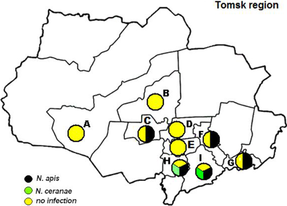 A Comprehensive Characterization Of The Honeybees In Siberia Russia