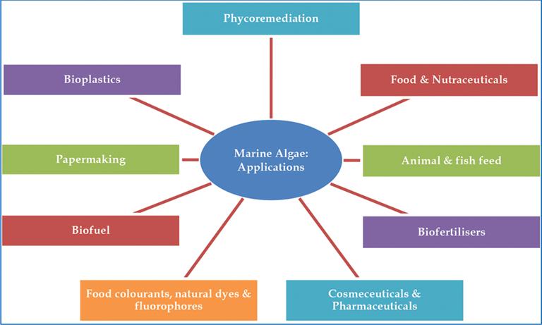 Marine Medicinal Foods: Implications and Applications, Macro and Microalgae