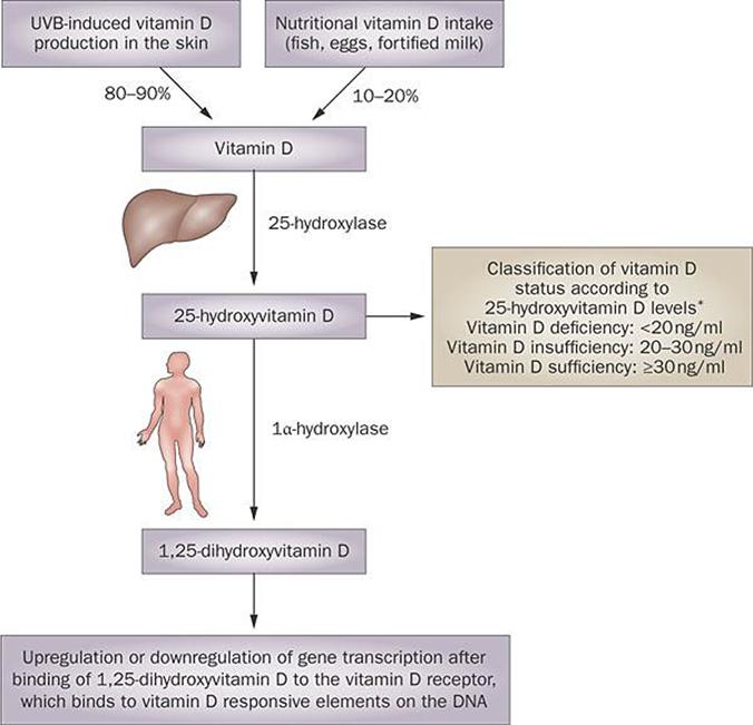 Vitamin D Deficiency Intechopen