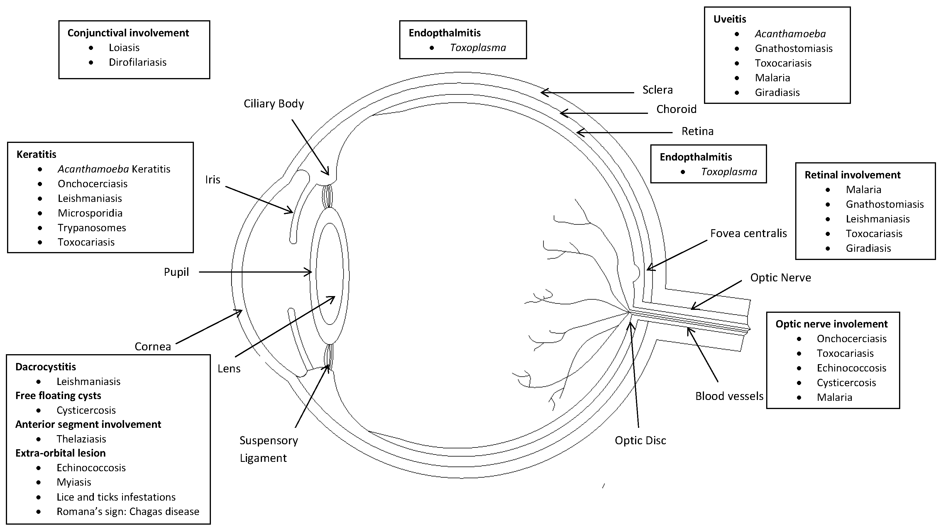 Ocular Parasitic Infections – An Overview | IntechOpen on